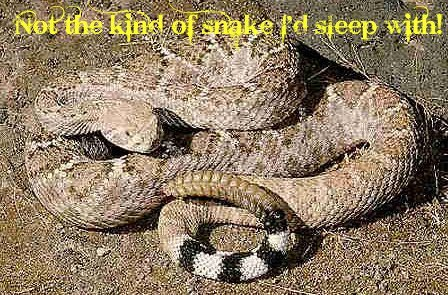 The Snake Fits In A Queen Sized Bed. For real